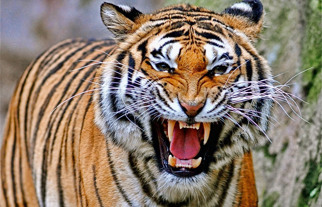 SUNDAY BLOG: Women Power And Tiger Mothers ... - photo#12