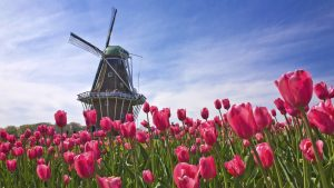 holland-desktop-wallpapers_010544928_139